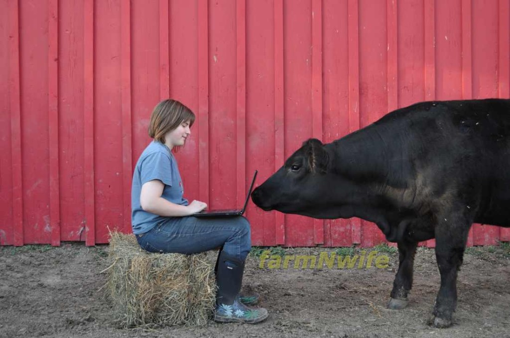 cow laptop