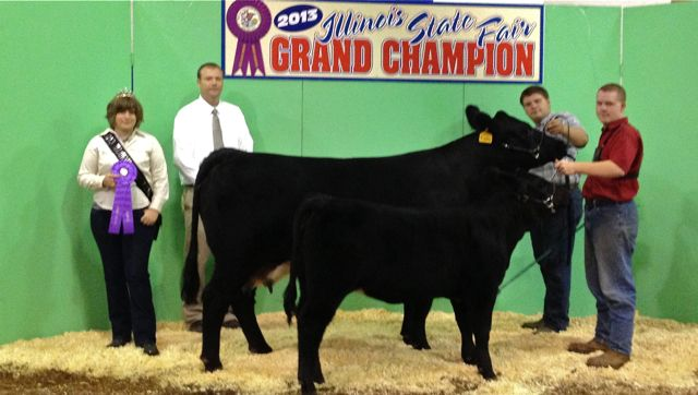 champion percentage simmental cow calf