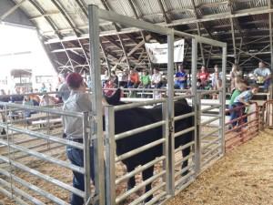 4H Steer sale