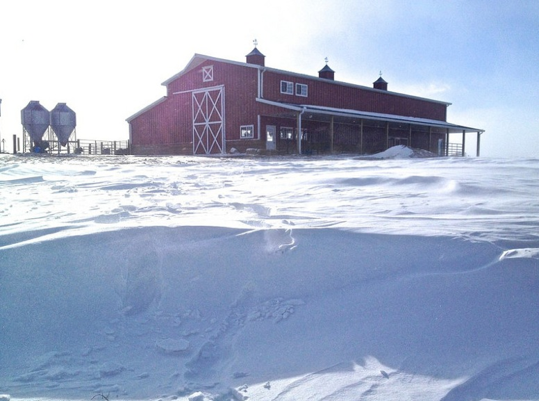 cattle barn snow blizzard
