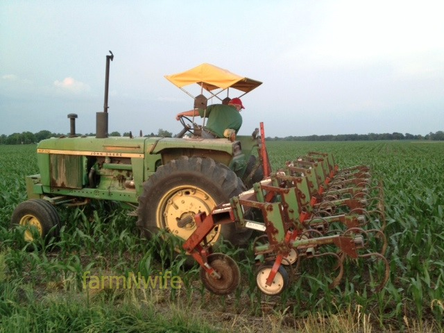 cultivating corn