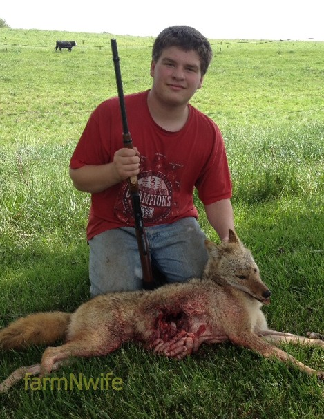 z and coyote